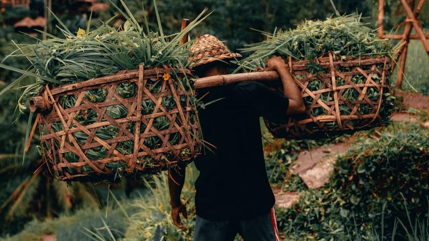 contadino delle risaie
