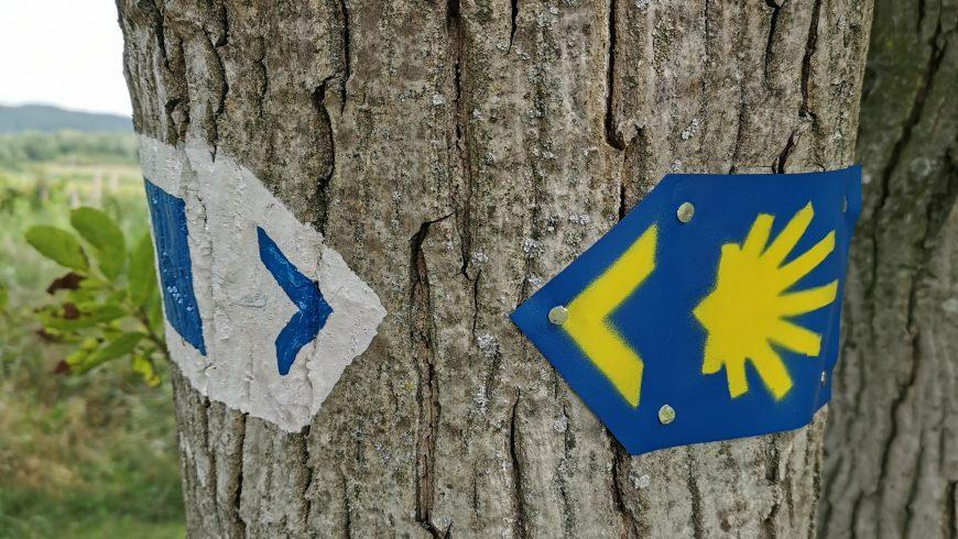 segnaletica freccia gialla e conchiglia