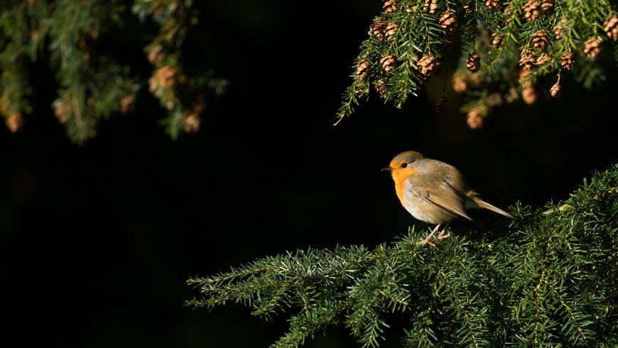 uccellino sul ramo di un albero