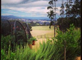 Uccelli, canguri e wallaby a un'ora da Melbourne