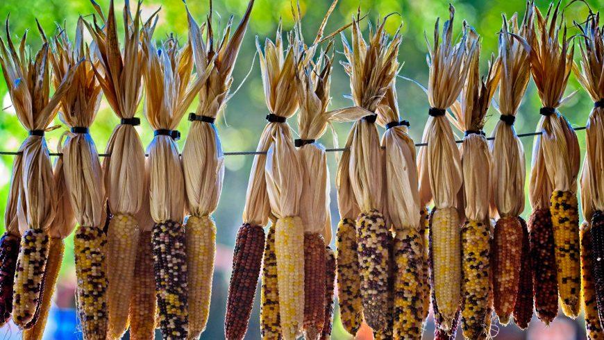 anno internazionale per la salute delle piante - biodiversità