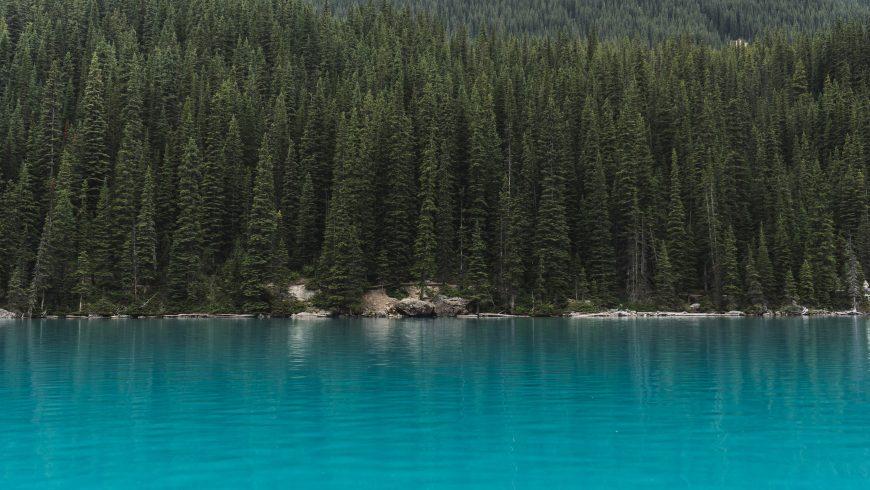 Foresta boreale nella tundra canadese