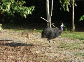 Birdwatching in Australia
