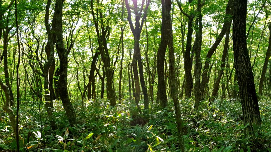 alberi tipici delle zone fitoclimatiche italiane