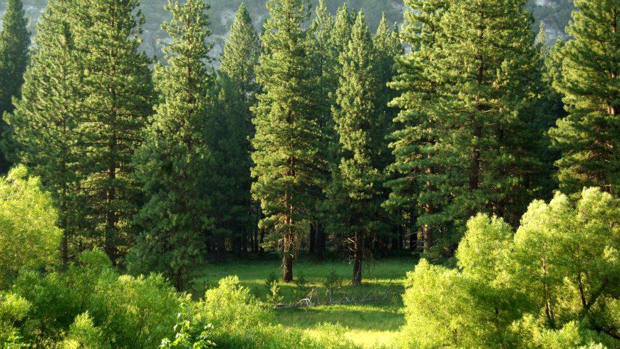 alberi tipici della zona fitoclimatica Fagetum