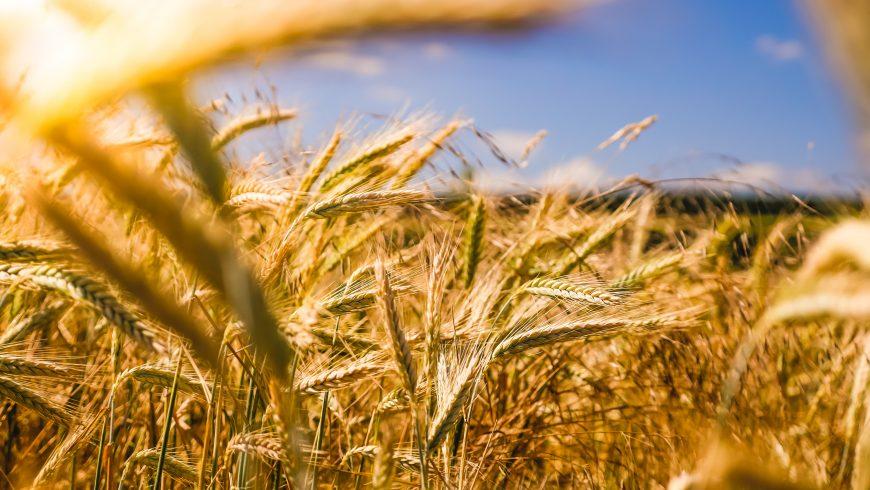 anno internazionale per la salute delle piante