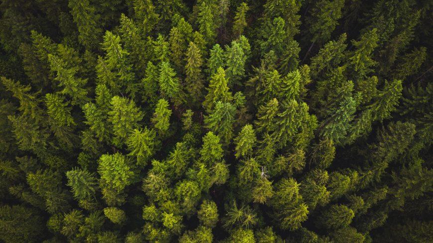 alberi visti dall'alto