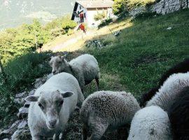 animali all'ecobnb Botton d'Oro in Valle Imagna