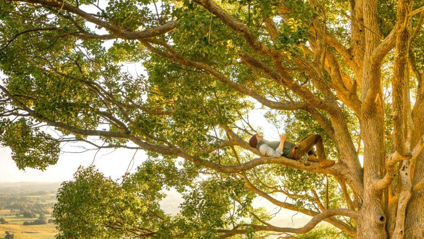 uomo su un albero