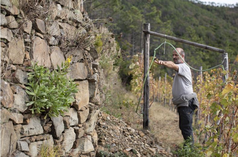 Uva ed eroi: i viticoltori delle Cinque Terre