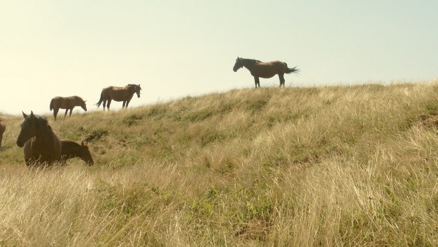 Cavalli selvaggi, Appennino Tosco Emiliano