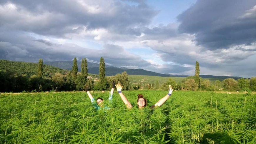 fattoria canapa Moro