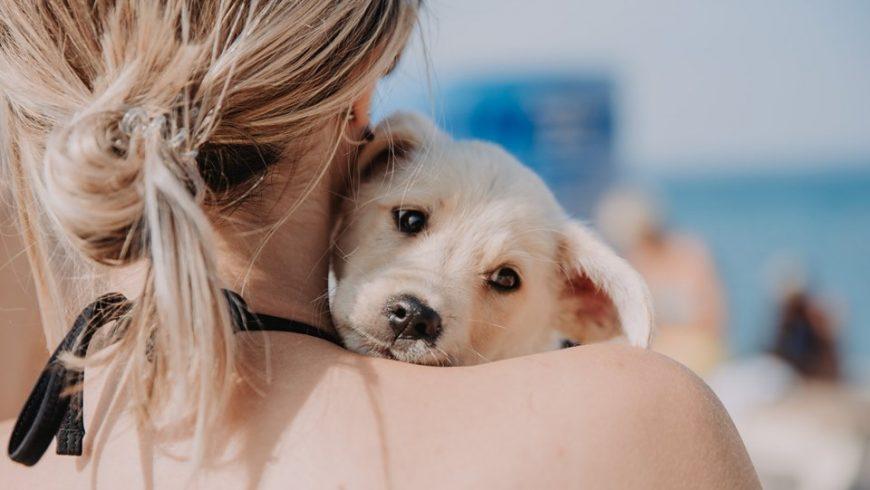 Protezione Animali Spalato