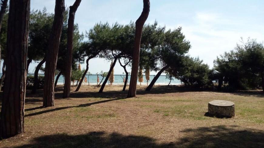 La pineta dell'Area Marina Protetta di Torre di Cerrano