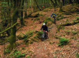 In mountain bike nel bosco