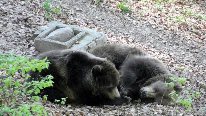 Una passeggiata con i bimbi tra gli orsi del Parco Adamello Brenta