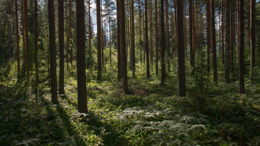 foresta verde stato ambiente report