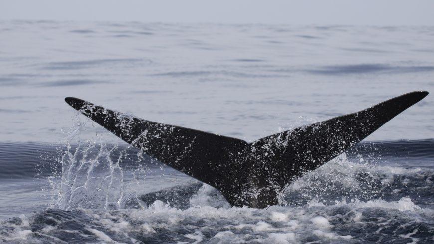 coda di balena in acqua