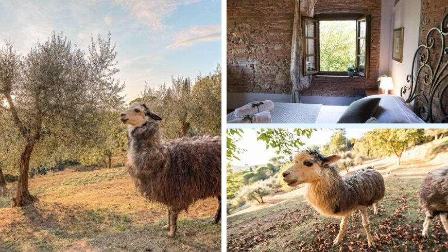alpaca country house ecobnb green
