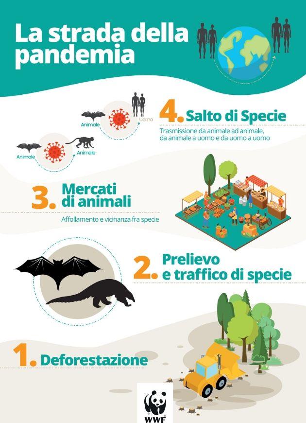 cause della pandemia
