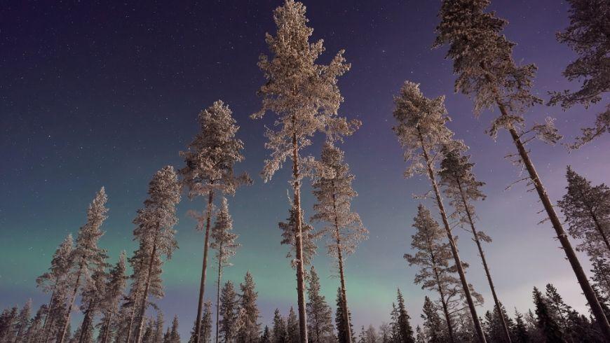 Aurora boreale nei boschi innevati