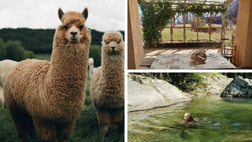 agriturismo con alpaca in italia ecobnb