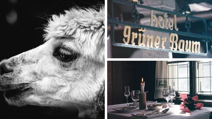 hotel green con zoo di alpaca in austria
