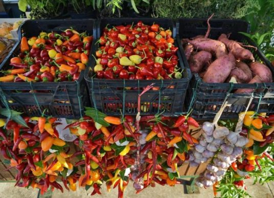 eco-market-istria