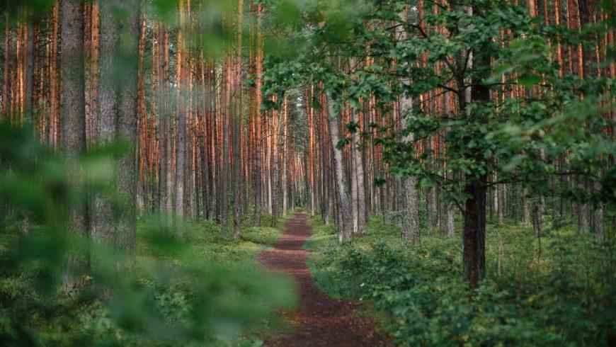 sentiero in Lituania