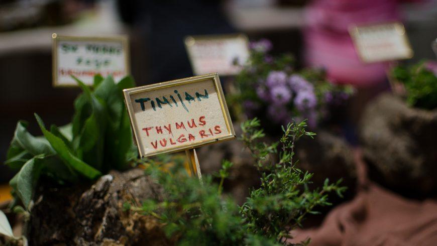 Festival delle piante selvatiche Kršan_ eventi eco-friendly in Istria