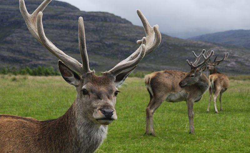 fauna of Stelvio national park