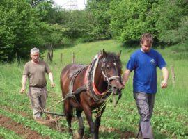 Agriturismo Biologico Pri Andrejevih in Slovenia