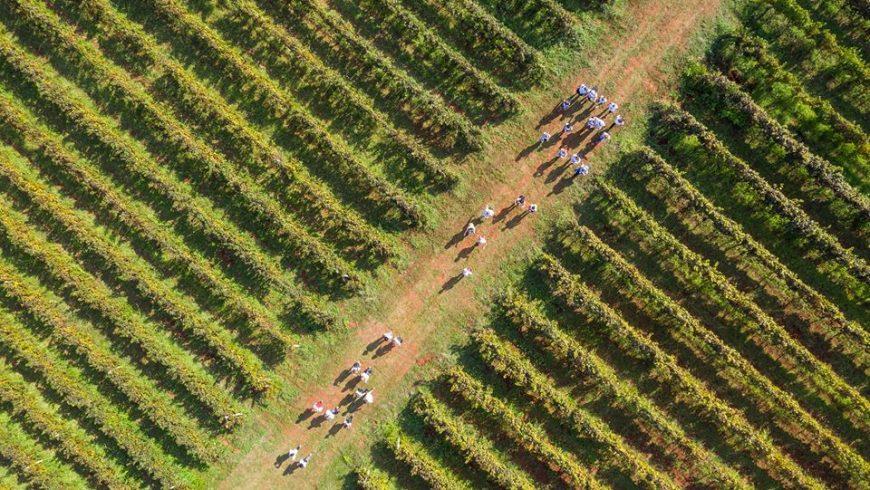 Istria vino e passeggiate