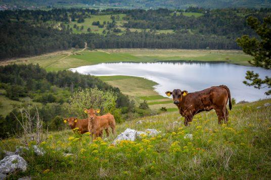 Scopri il Parco Naturale di Pivka, uno tra i parchi naturali meno conosciuti in Slovenia