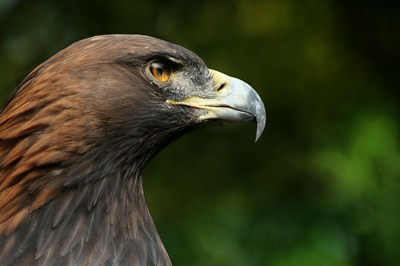 fauna del parco nazionale dello stelvio