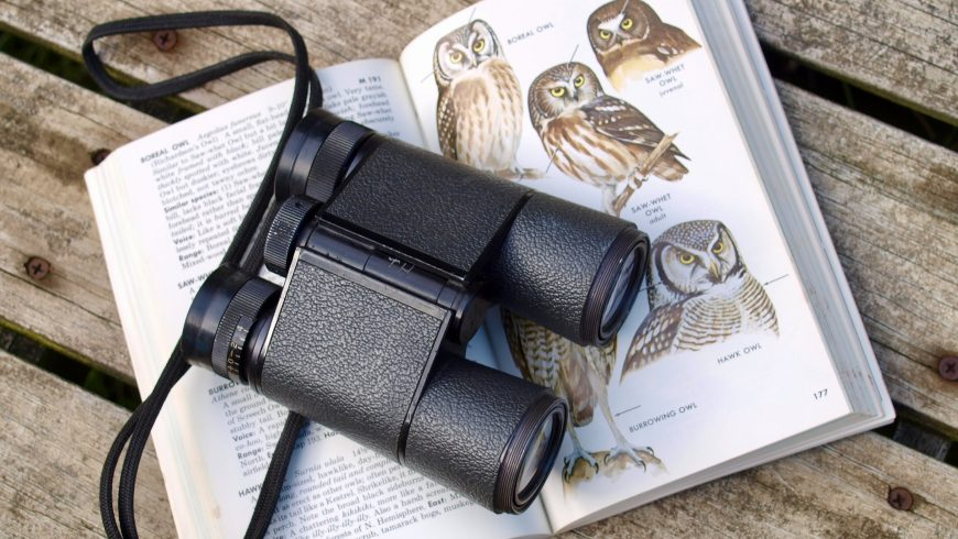 guida al birdwatching