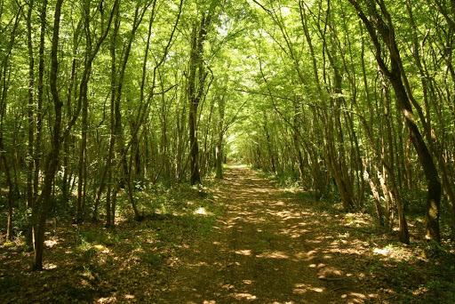La foresta di Kontija
