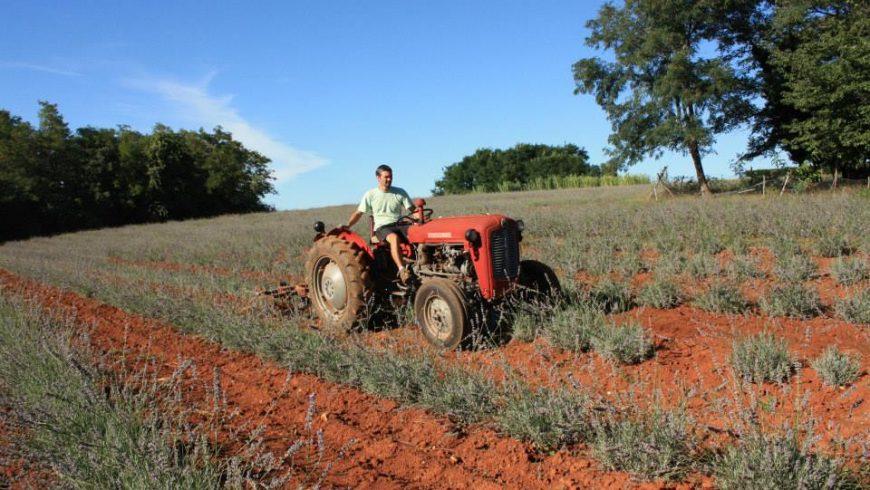 agricoltura biologica Istria