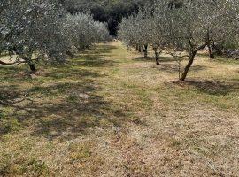 Eco Villa Anadi: giardino biologico