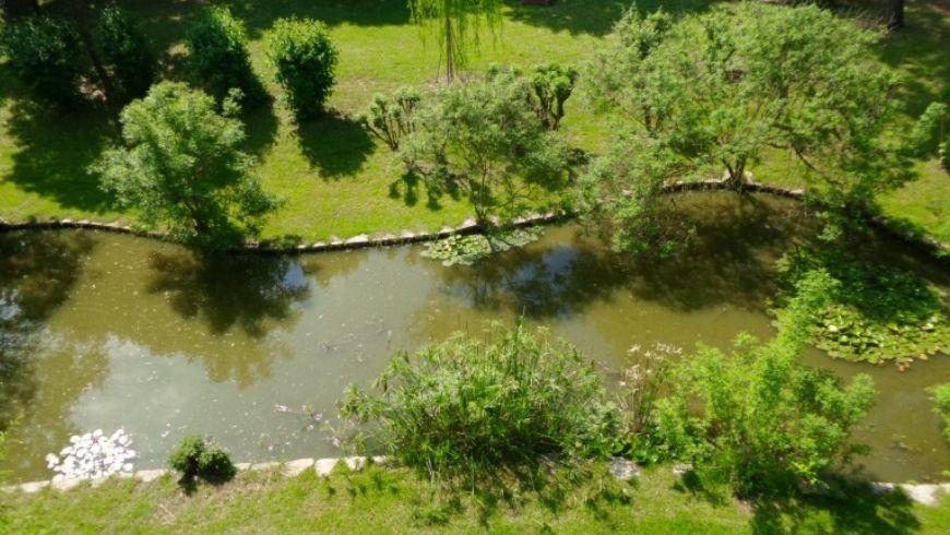 lago di awen tree house su ecobnb