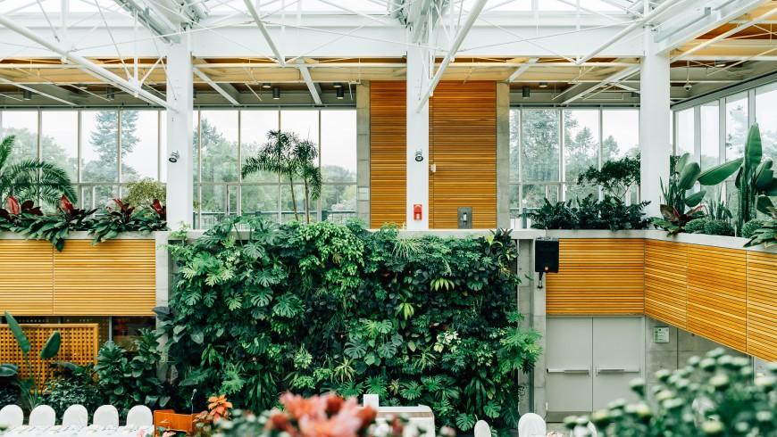 I benefici delle pareti verdi