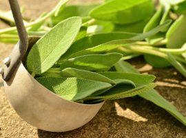 Piante aromatiche da mettere nel tuo giardino verticale fai da te