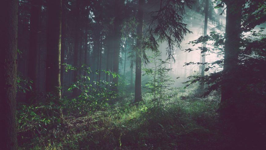 Come le foreste migliorano il sistema immunitario
