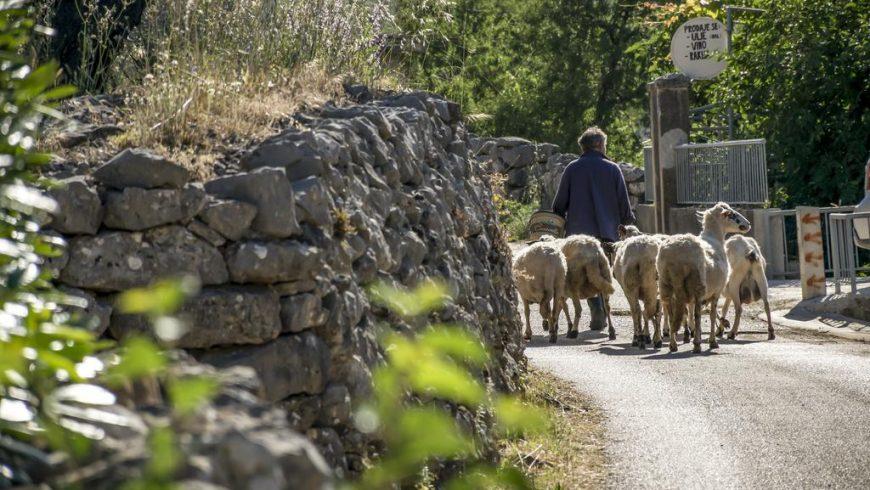 Esperienze locali in Dalmazia