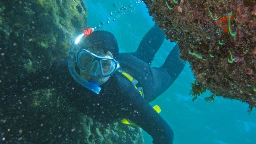 Fare snorkeling al Parco Nazionale dei Brioni è sicuramente una delle esperienze più green da fare in Istria