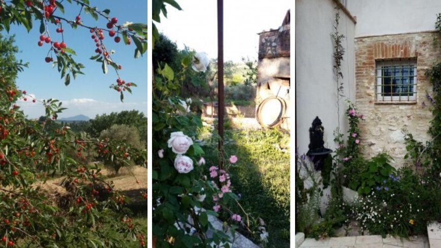 Foto delle rose e della vegetazione attorno alla casa di paglia