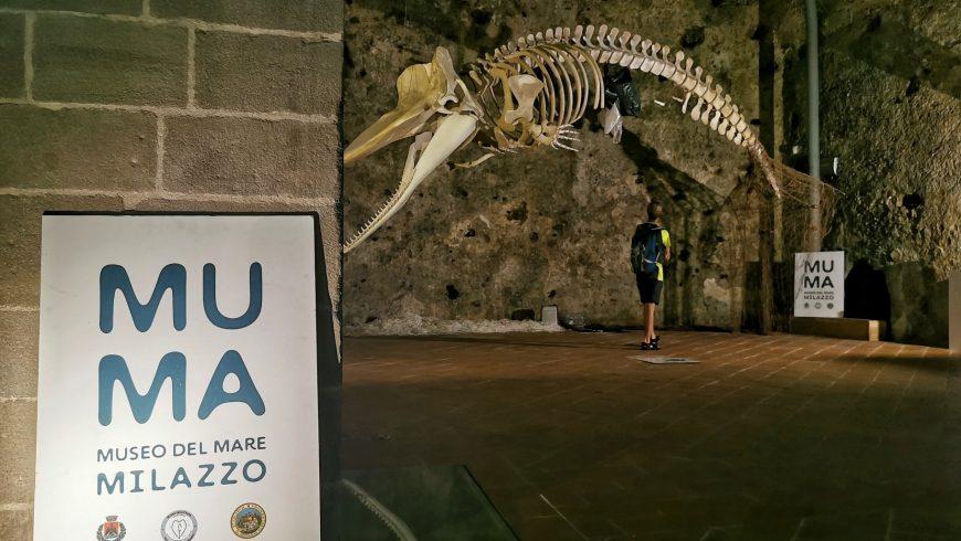 Ossa di un capodoglio al museo del mare a Milazzo