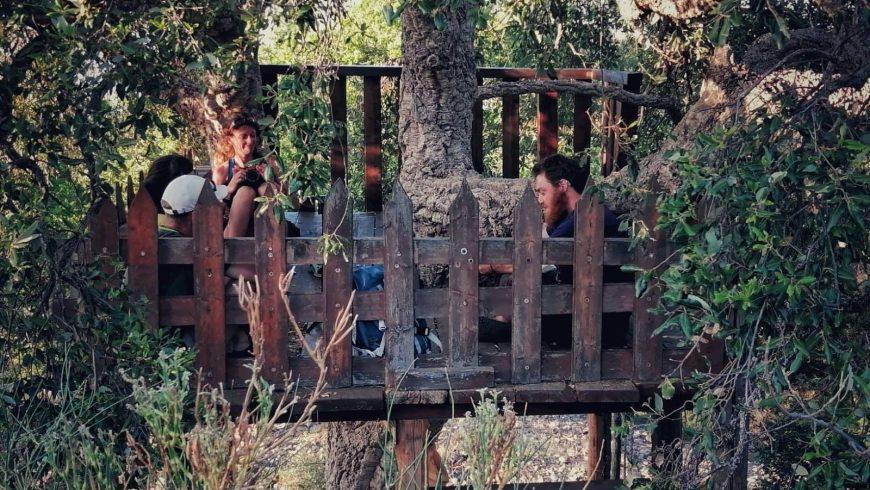 Turisti seduti su una piattaforma di legno costruita su un albero