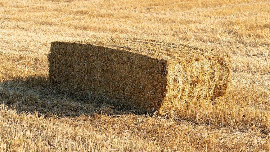Balla di paglia rettangolare su un campo