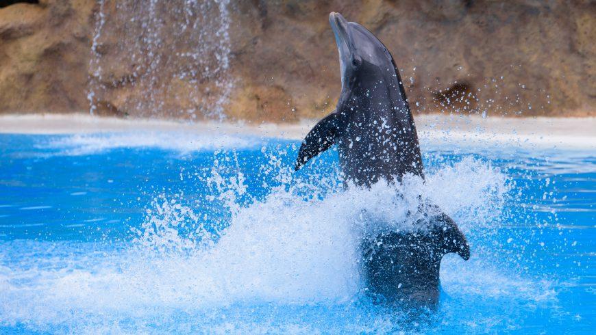delfino che si esibisce per i turisti